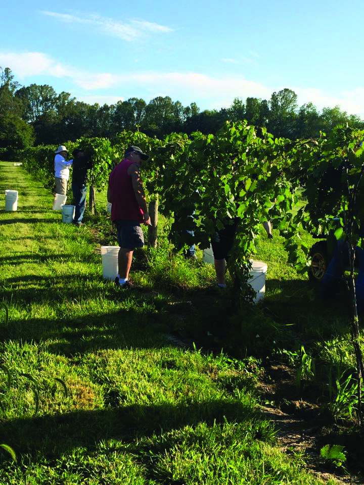 Davidson Family's Venture, Hocking Hills Winery, Establishes Roots in Logan