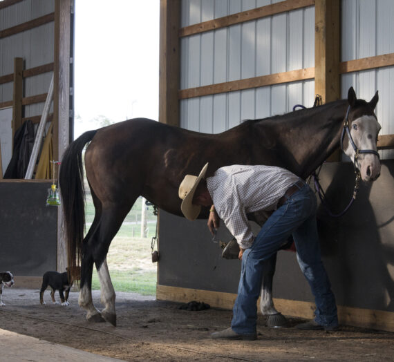 Athens County Horse Farm Rescues Slaughter-Bound Horses and More