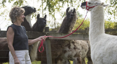 """Perry County Woman Discovers """"Llama Love"""""""