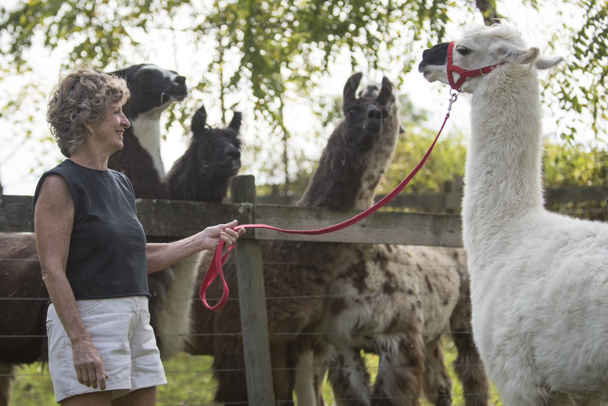 "Perry County Woman Discovers ""Llama Love"""