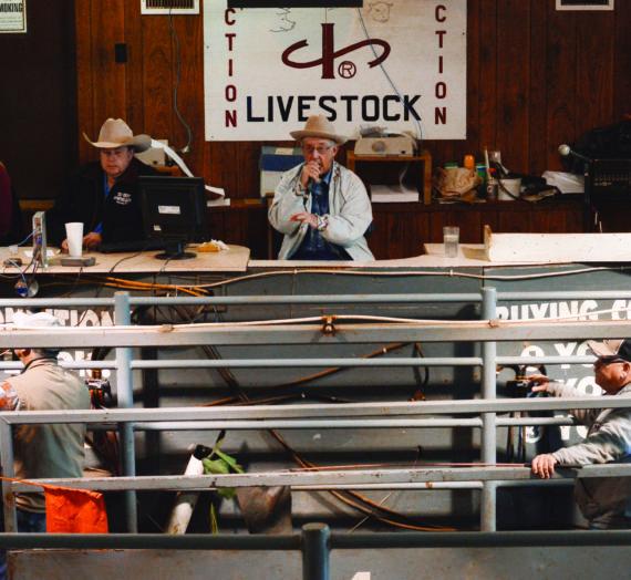 Muskingum Livestock Auction sells Ohio-bred cattle to big bidders